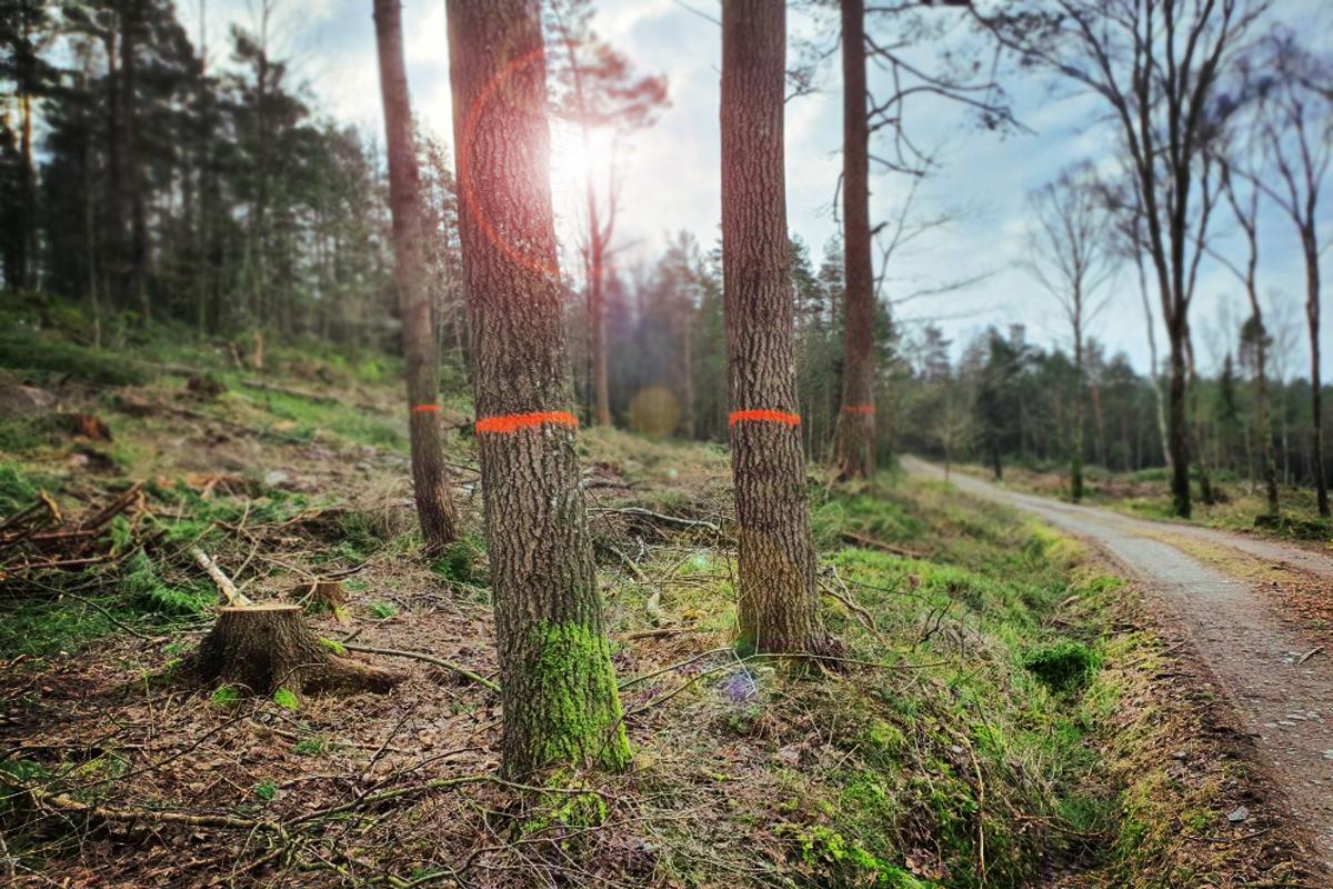 skog-märkning
